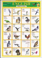 Английский язык Раздаточная таблица Английский в картинках Часть 1. Птицы