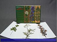 Гербарии Сорные растения (24 вида)