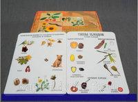 Коллекции Семена и плоды с раздаточным материалом