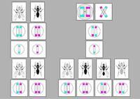 Динамические пособия Перекрест хромосом