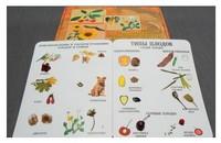 Коллекции Семена и плоды