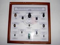 Коллекции Коллекция Семейство жуков
