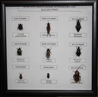 Коллекции Приспособление изменений в конечностях насекомых