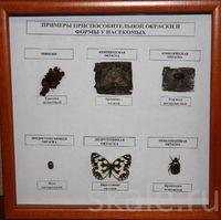 Коллекции Примеры защитных приспособлений у насекомых