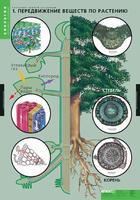 Распродажа со склада Комплект таблиц Растение - живой организм (4шт.)