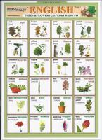 Английский язык Раздаточная таблица Английский в картинках Часть 4. Деревья и цветы