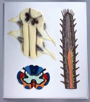 Барельефные модели Строение спинного мозга
