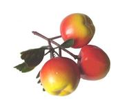 """Муляжи Муляжи """"Ветка яблок"""""""