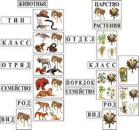 Распродажа со склада Модель-аппликация Классификация растений и животных (Витринный экземпляр)