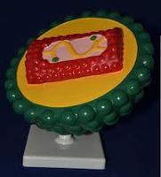 Модели из пластмассы Вирус СПИДа