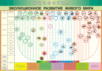 Таблицы Таблица Эволюционное развитие живого мира (Винил)