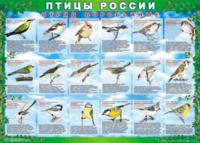 Печатные пособия Таблица Птицы России (комплект из 4 таблиц) (Винил)