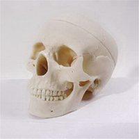 Пластмассовые кости скелета человека Череп человека (смонтированный)