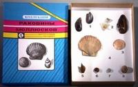 """Коллекции Коллекция """"Раковины моллюсков"""" (Витринный экземпляр)"""