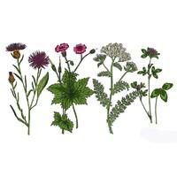 Гербарии Медоносные растения (24 вида)