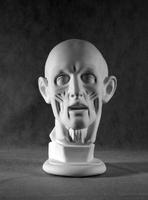 Головы Голова Гудон анатомическая