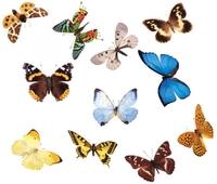 """Коллекции Коллекция энтомологическая """"Бабочки для рисования"""""""