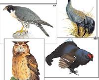 Модель-аппликация Модель-аппликация Многообразие хордовых. Птицы