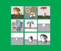 Модель-аппликация Модель-аппликация Размножение шляпочного гриба
