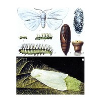 Коллекции Коллекция Гусеница