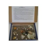 Коллекции Коллекция Обитатели морского дна