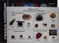 Коллекции Коллекция Шишки,плоды,семена деревьев и кустарников