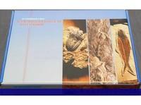 Коллекции Палеонтологическая коллекция (Гипс) (23шт.)