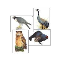 Модель-аппликация Модель-аппликация Цикл развития птицы