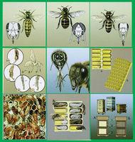 Модель-аппликация Модель-аппликация Пчелы. Устройство улья