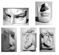 Анатомические детали Детали лица (набор из 5 предметов)