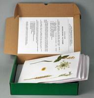 Гербарии Гербарий Морфология растений (5 тем х 3 листа)