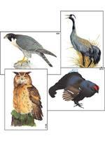 Модель-аппликация Разнообразие высшых хордовых.Пресмыкающиеся и птицы