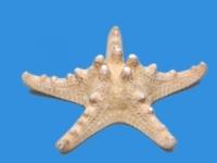Препараты Звезда морская