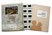 Естествознание Слайд-комплект  «Домашние и дикие животные»