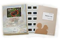 Естествознание Слайд-комплект  «Времена года»